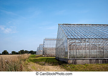 Greenhouses - A row of disused and abandoned greenhouses ...