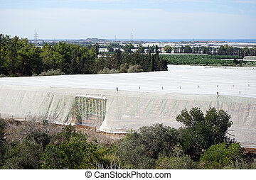 Greenhouses - Big white plastic greenhouses and orchard in ...