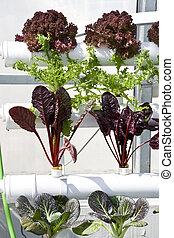 greenhouses., hydroponics, legumes