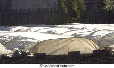 Greenhouses in the farm - Greenhouse from polyethylene in a...