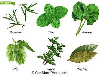 Greens and spices realistic vector set. Rosemary, mint, ...