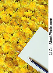 Blank paper sheet and fountain pen lying on dandelion background