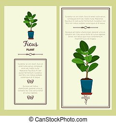 Greeting card with ficus plant