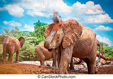 gregge elefanti, godere, il, fango, in, kenya.