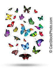 gregge, farfalle