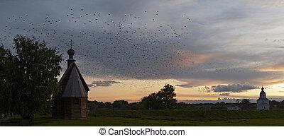 gregge, tramonto, uccelli