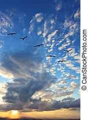 gregge, triangolo, uccelli, migratorio