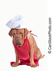 grembiule, cane, isolato, chef, fondo, cappello bianco, rosso
