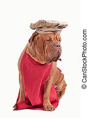 grembiule, come, vestito, cane, isolato, chef, fondo, cappello bianco, rosso