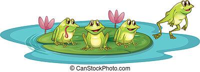 grenouilles, étang