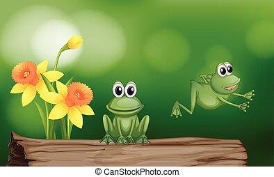 grenouilles, vert, bûche, deux