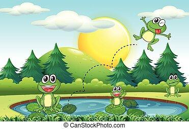 grenouilles, vivant, étang