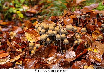 grew, caído, amarillo, bosque, árbol, hongos