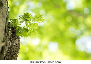 grew, hoja, tronco