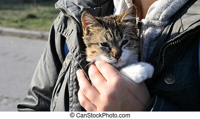 Grey and white kitten sits calmly in woman's hands inside jacket