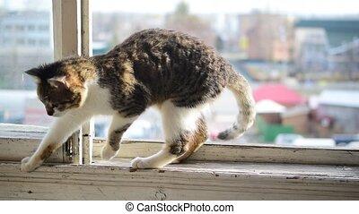 Grey and white tabby cat walks on window sill of balcony