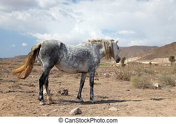 Grey Andalusian horse on a farm in Andalusia, Spain