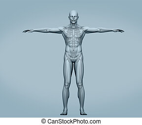 Grey body digital skeleton with muscles