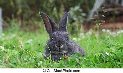 Grey bunny in a grass