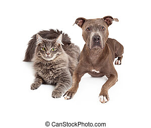 Grey Cat and Dog Laying Together