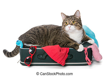 Grey cat lay on a suitcase