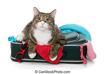 Grey cat lay on a suitcase full assembled for a holiday...
