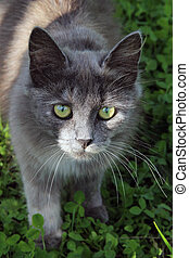 Grey cat on green grass
