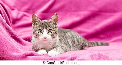 grey cat on pink