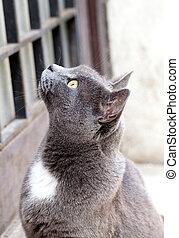 grey cat.