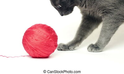 grey cat playing with red thread ball over white background