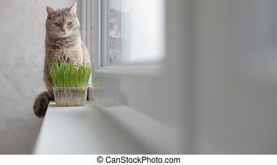 Grey cat sitting on the window sill