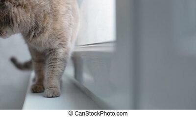 Grey cat sitting on the window sill