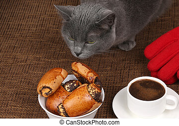 grey cat smells the rolls with poppy seeds and white Cup of black coffee