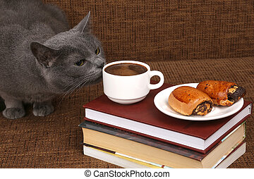 grey cat sniffing a white Cup of black coffee