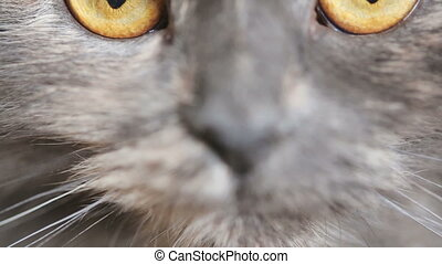 Cats eyes closeup