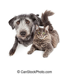 Grey Dog and Cat Laying Closely Together