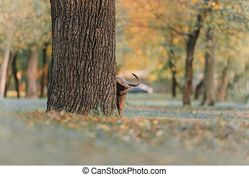 grey dog pees on a tree in the park