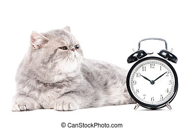grey exotic kitty cat and clock