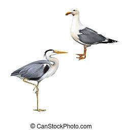 Grey Heron, Ardea Cinerea, white bird seagull - Grey Heron...