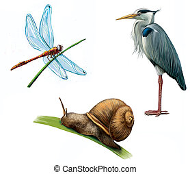 Grey Heron, dragon fly, and snail. Isolated realistic...