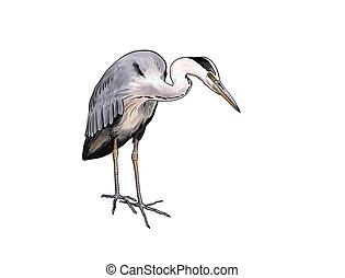 Grey heron - Digital toon illustration of a Grey heron...