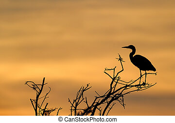 Grey Heron in treetop with sunset.