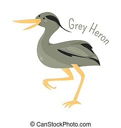 Grey heron isolated on white