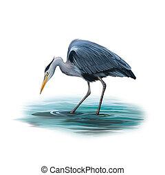 Grey Heron standing in water, Ardea Cinerea - Grey Heron...