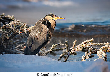 Grey heron standing near river with water flowing in ...