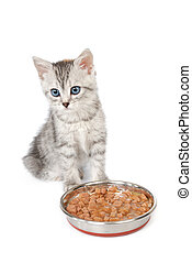 Grey kitten near a bowl with food isolated on white