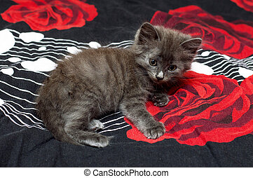 grey kitten on the bed