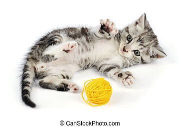 kitten playing with yellow clew - Grey kitten playing with...