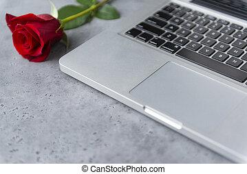 grey laptop, 1 red rose on grey background