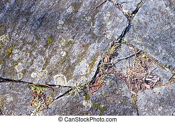 Grey mossy wall background